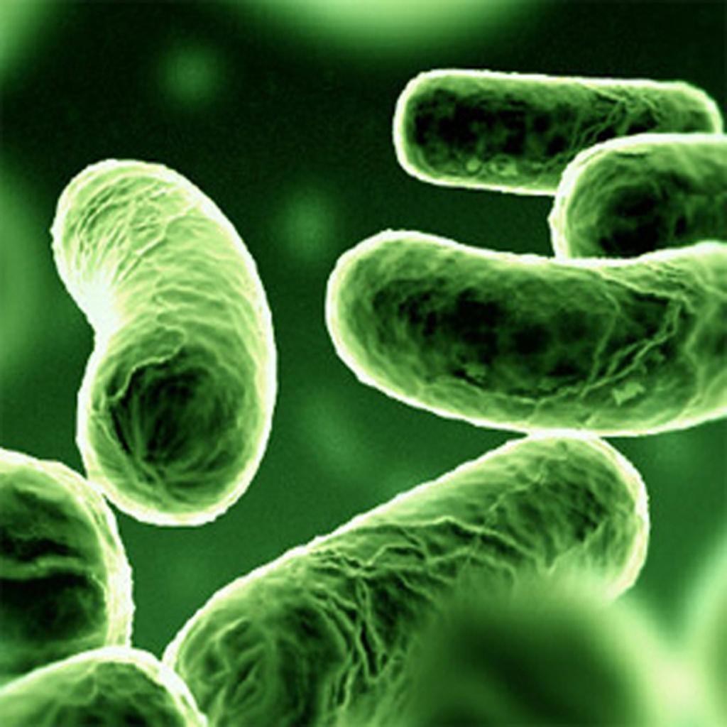 Фото та назви бактерій 7 фотография